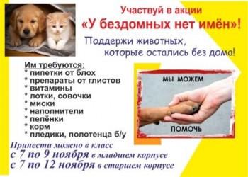 Поддержите бездомных животных!